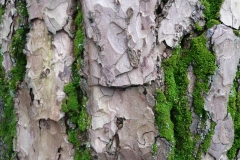 Baum mit Moos_Foto von Anja Hardt