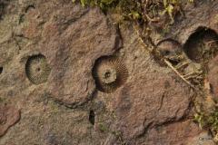 Fossil_Foto von Uwe Deffert