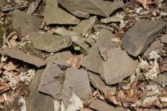 Wachstum in alten Steinen_Foto von Ingrid Becker