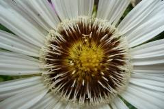 Blume_Foto von Anja Hardt