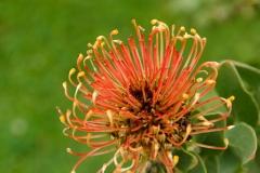 orange Blüte_Foto von Bärbel Liß