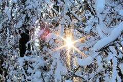 Im Winterwald_Foto von Sigrid Kasburg