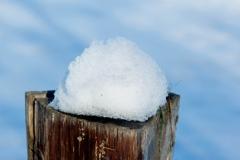 Schneehäubchen_Foto von Bärbel Liß