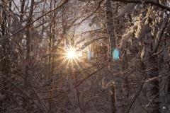 Sonnenstrahlen 4_Foto von Inge Engbruch