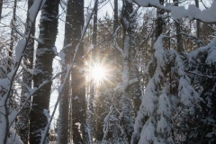 Wintertraum_Foto von Anita Haucap