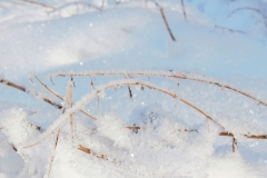 Winterzauber_Foto von Sigrid Kasburg