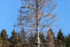 Toter-Baum