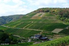 Anja-Weinfelder-u.-Wege