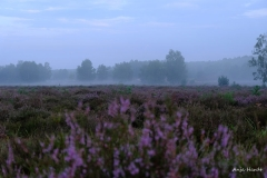 1.-Wahner-Heide