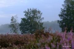 3.-Wahner-Heide