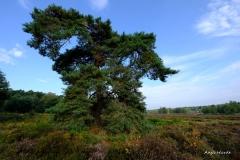 4.-Wahner-Heide