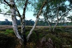 6.Wahner-Heide