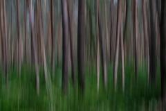 Im-Wald-Dynamik-1