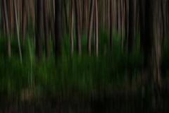 Im-Wald-Dynamik-4