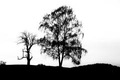 Silhouette-kl-02