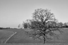 Baum-hcp_022021