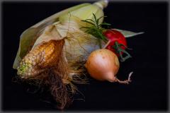 Frisch-geerntet-vom-Maisfeld