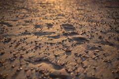 Schimmer auf dem Sand