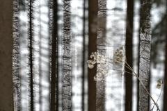Doppelbelichtung Wald P1237823kl