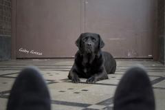 3-Fuesse-Hund-gg