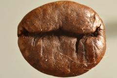 04-Kaffeebohne
