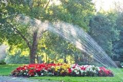 7-Wasser-Blumen