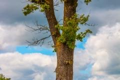 Mein-Freund-der-Baum