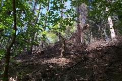 Wald-2